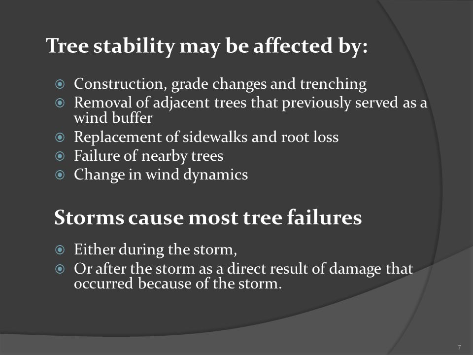 Tree stability may be affected by: Construction, grade changes and trenching Removal of adjacent trees that previously served as a wind buffer Replacement of sidewalks and root loss Failure of nearby trees Change in wind dynamics Storms cause most tree failures Either during the storm, Or after the storm as a direct result of damage that occurred because of the storm.