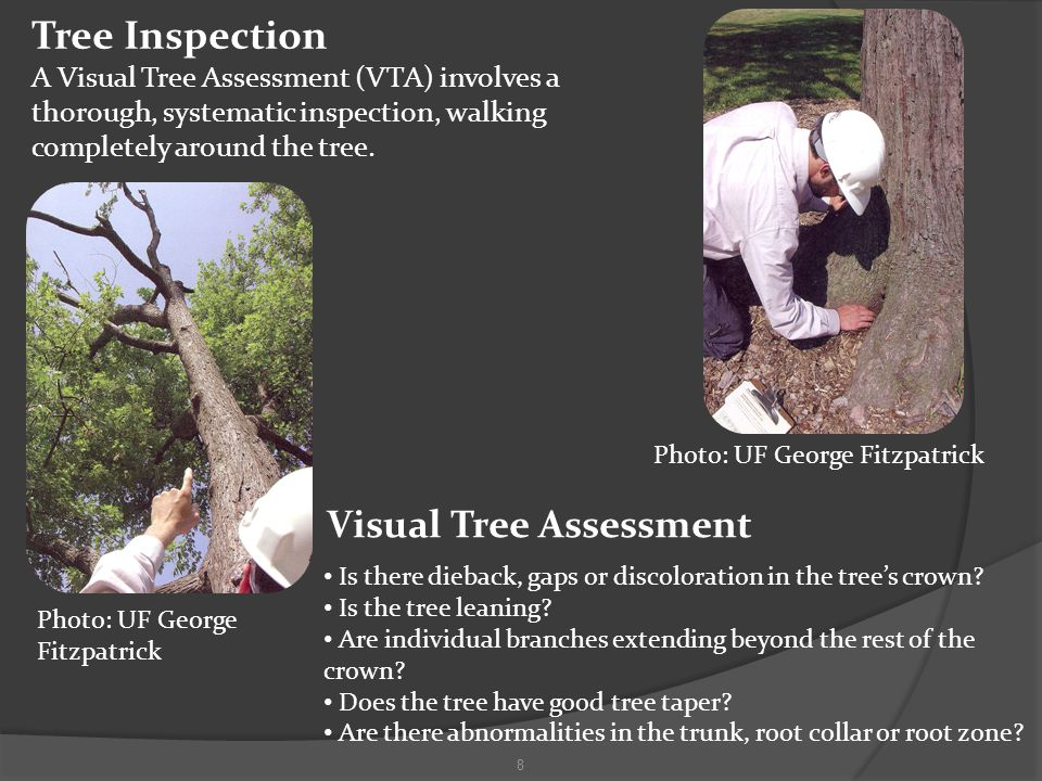 Tree Inspection A Visual Tree Assessment (VTA) involves a thorough, systematic inspection, walking completely around the tree.