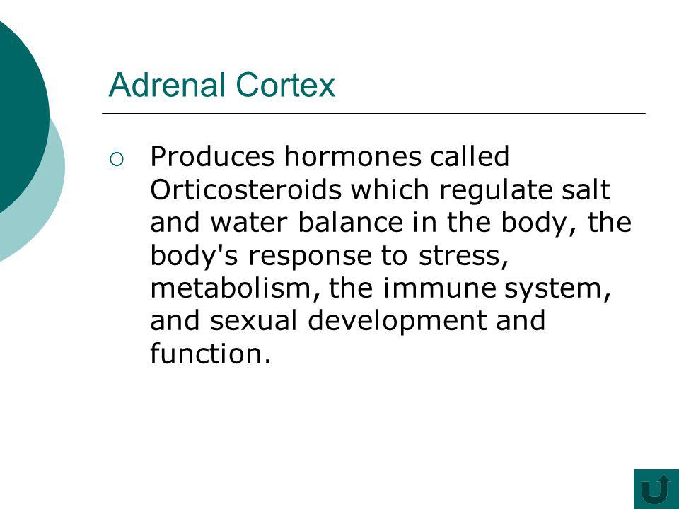 Adrenal Cortex Produces hormones called Orticosteroids which regulate salt and water balance in the body, the body's response to stress, metabolism, t