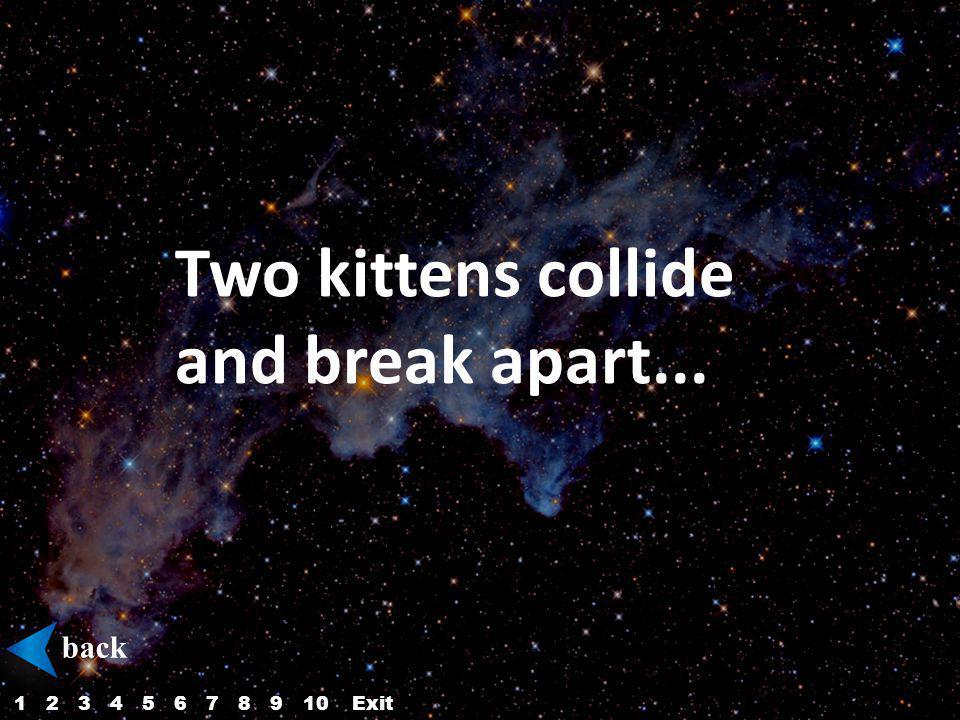 Two kittens collide and break apart... back 12345687910Exit