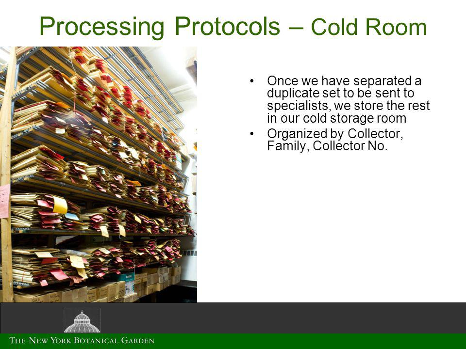 Processing Protocols – Cold Room Once we have separated a duplicate set to be sent to specialists, we store the rest in our cold storage room Organized by Collector, Family, Collector No.