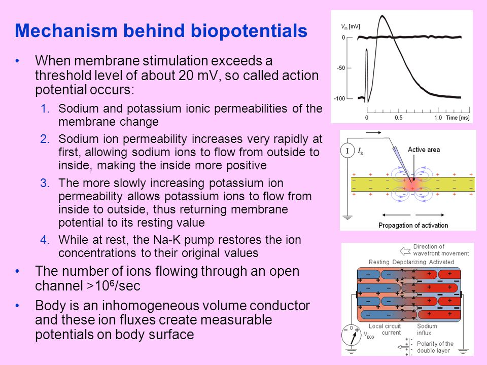 Mechanism behind biopotentials When membrane stimulation exceeds a threshold level of about 20 mV, so called action potential occurs: 1.Sodium and pot