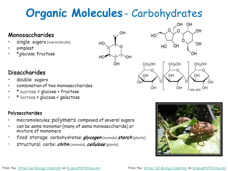 Organic Molecules - Carbohydrates Monosaccharides single sugars (one molecule) simplest *glucose, fructose Disaccharides double sugars combination of two monosaccharides * sucrose = glucose + fructose * lactose = glucose + galactose Polysaccharides macromolecules; polymers composed of several sugars can be same monomer (many of same monosaccharide) or mixture of monomers food storage carbohydrates: glycogen (animals) starch (plants) structural carbs: chitin (animals), cellulose (plants) From the Virtual Cell Biology Classroom on ScienceProfOnline.comVirtual Cell Biology ClassroomScienceProfOnline.comFrom the Virtual Cell Biology Classroom on ScienceProfOnline.comVirtual Cell Biology ClassroomScienceProfOnline.com
