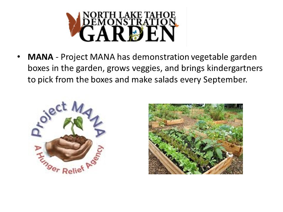 MANA - Project MANA has demonstration vegetable garden boxes in the garden, grows veggies, and brings kindergartners to pick from the boxes and make salads every September.