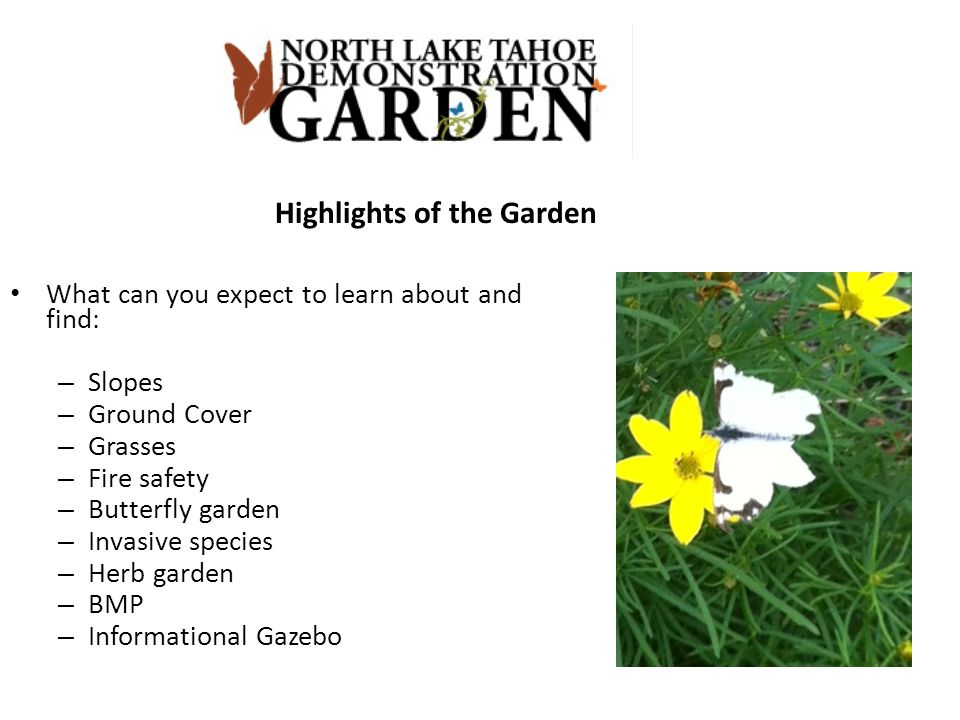 Highlights of the Garden What can you expect to learn about and find: – Slopes – Ground Cover – Grasses – Fire safety – Butterfly garden – Invasive sp