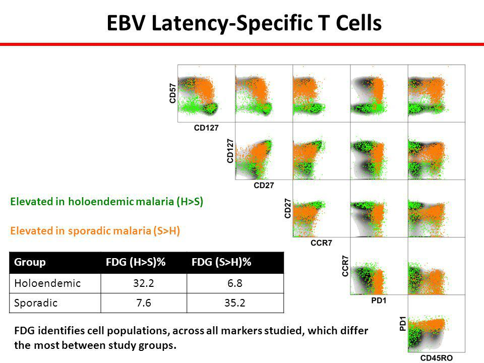 EBV Latency-Specific T Cells Elevated in holoendemic malaria (H>S) Elevated in sporadic malaria (S>H) GroupFDG (H>S)%FDG (S>H)% Holoendemic32.26.8 Sporadic7.635.2 FDG identifies cell populations, across all markers studied, which differ the most between study groups.