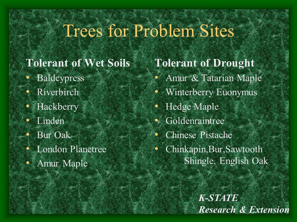 K-STATE Research & Extension Trees for Problem Sites Tolerant of Wet Soils Baldcypress Riverbirch Hackberry Linden Bur Oak London Planetree Amur Maple