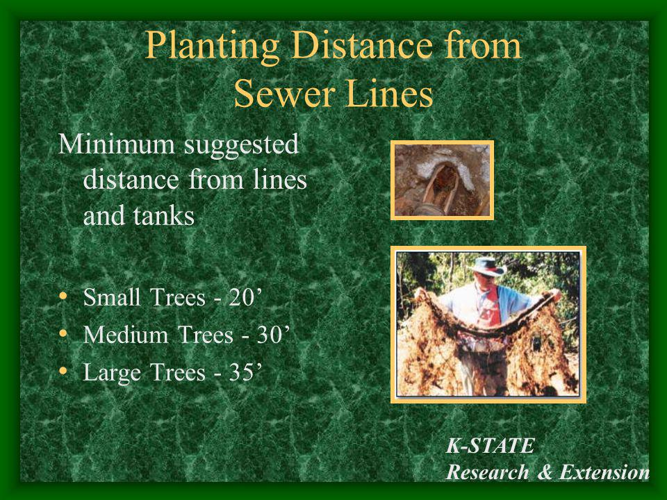 K-STATE Research & Extension Planting Distance from Sewer Lines Minimum suggested distance from lines and tanks Small Trees - 20 Medium Trees - 30 Lar