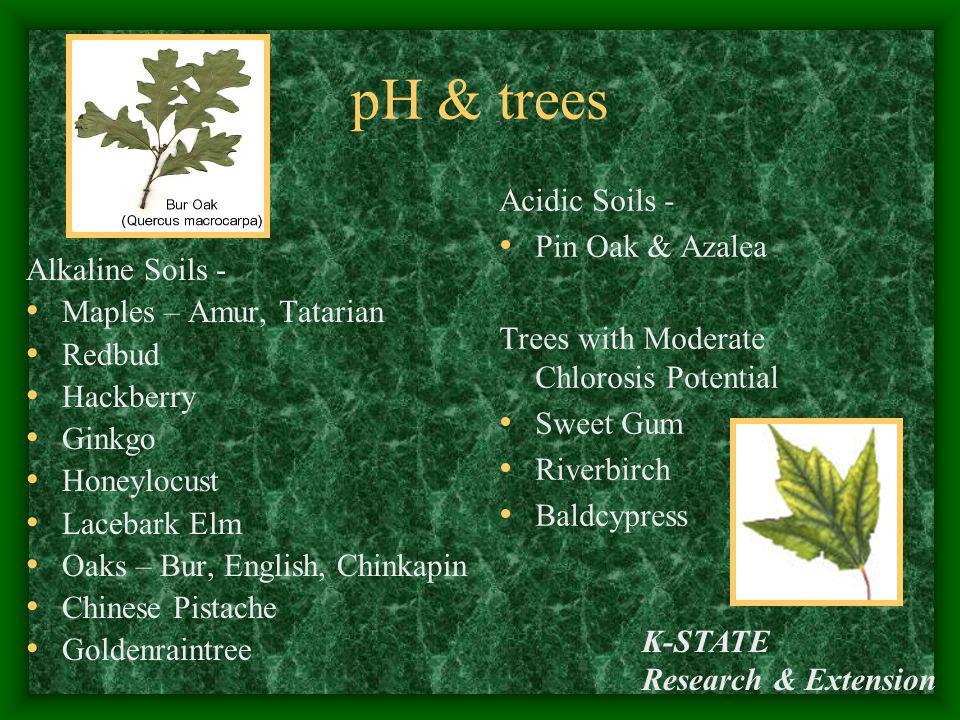 K-STATE Research & Extension pH & trees Alkaline Soils - Maples – Amur, Tatarian Redbud Hackberry Ginkgo Honeylocust Lacebark Elm Oaks – Bur, English,