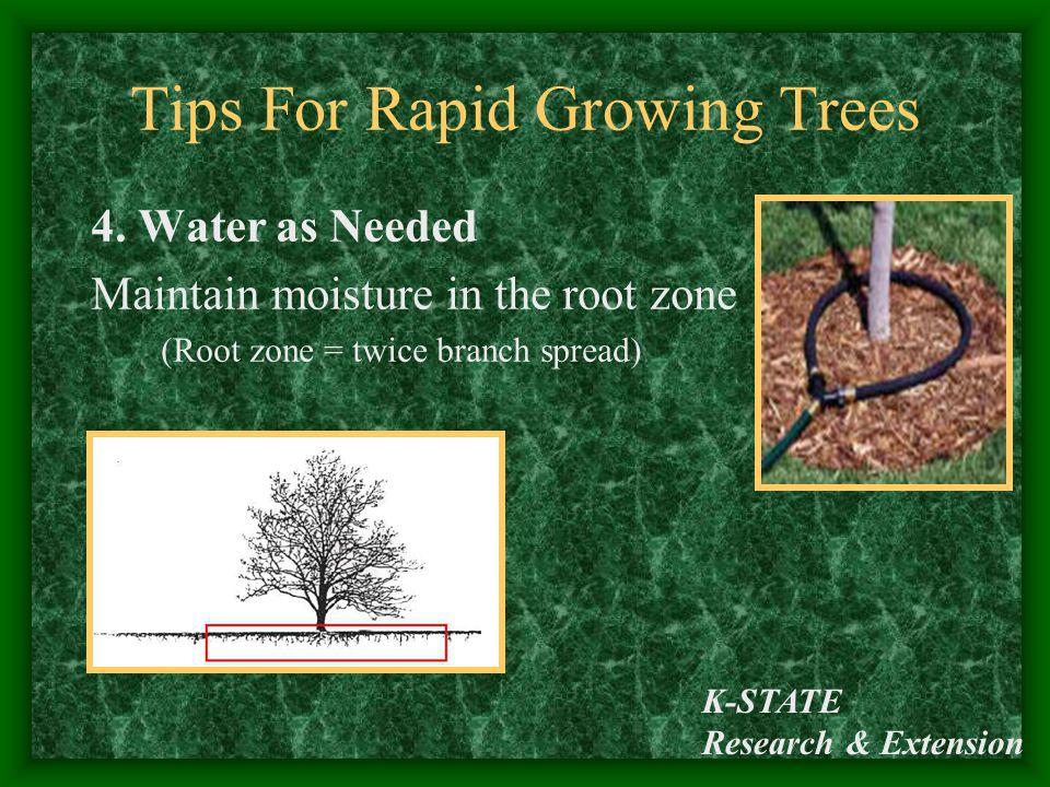 K-STATE Research & Extension Tips For Rapid Growing Trees 4. Water as Needed Maintain moisture in the root zone (Root zone = twice branch spread)