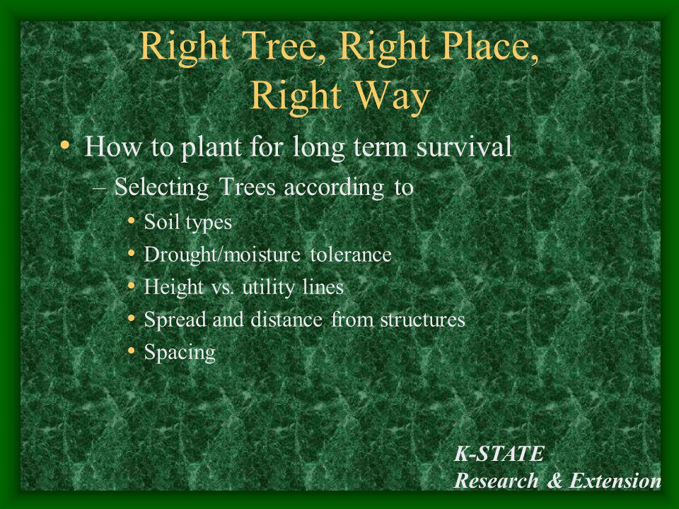 K-STATE Research & Extension Right Tree, Right Place, Right Way How to plant for long term survival –Selecting Trees according to Soil types Drought/m