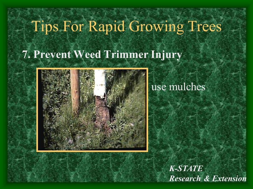 K-STATE Research & Extension Tips For Rapid Growing Trees 7. Prevent Weed Trimmer Injury use mulches