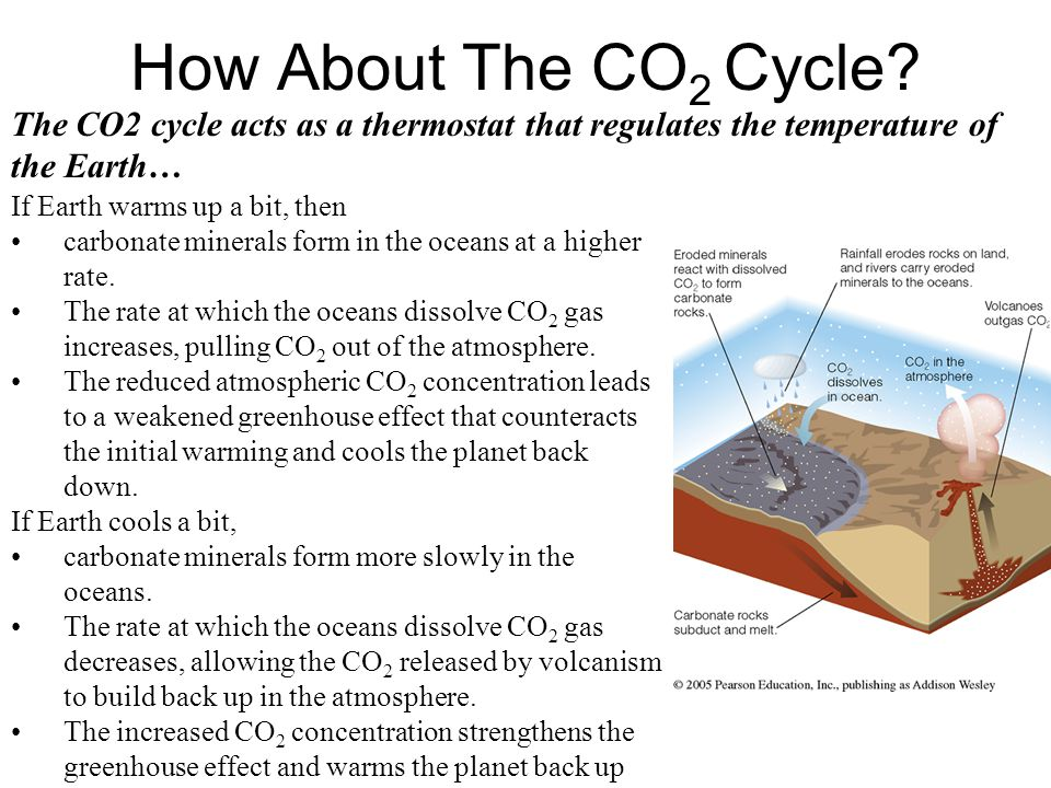 How About The CO 2 Cycle.