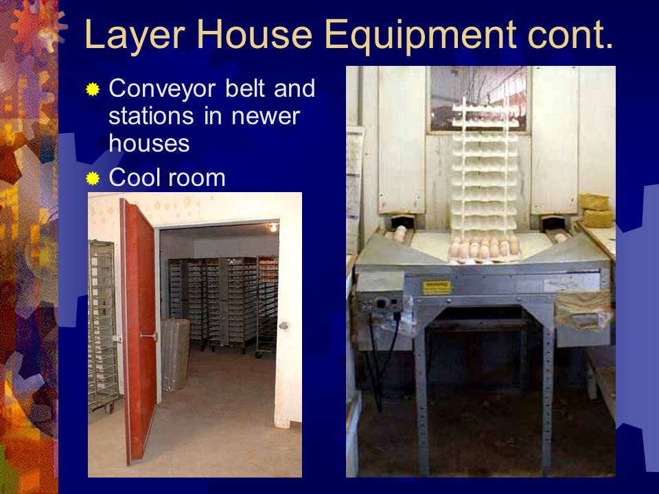 Layer House Equipment cont. Conveyor belt and stations in newer houses Cool room