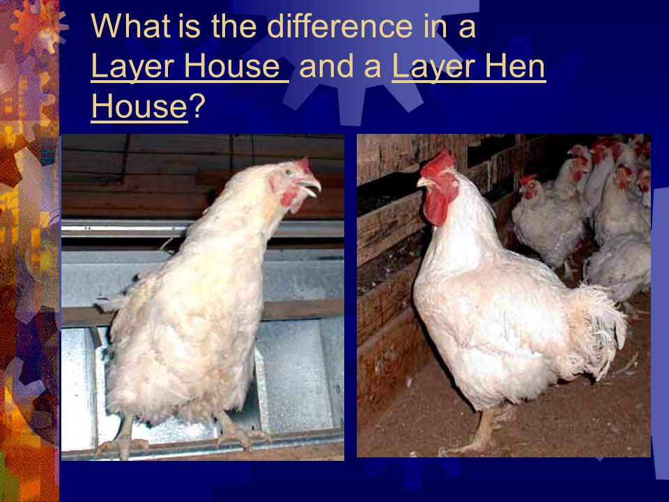 What is the difference in a Layer House and a Layer Hen House?