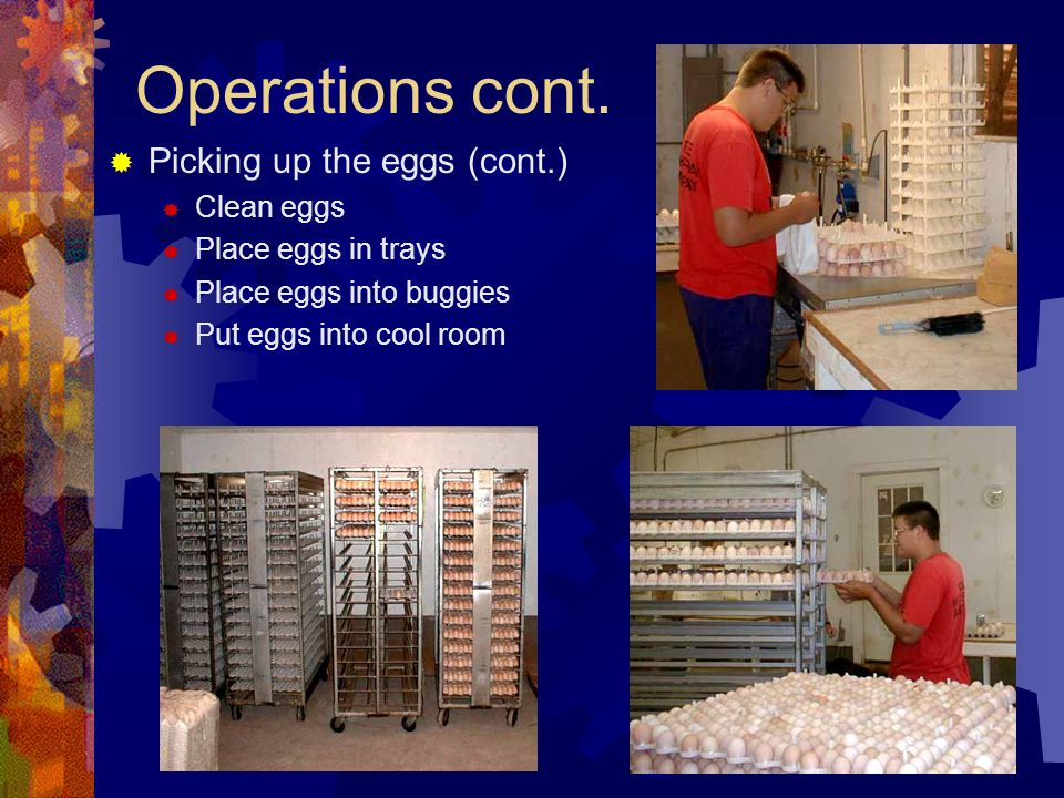 Resources needed Hens Roosters Feed Water Medication Labor