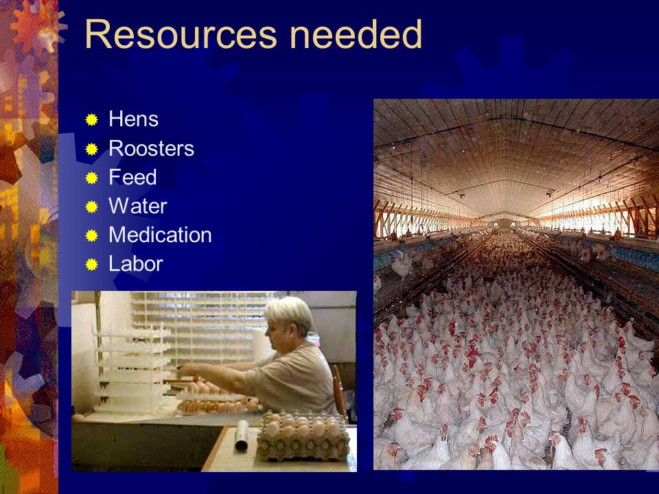 House Contracts The company pays for and delivers: Chickens Feed Medicine Egg trays and buggies The grower pays for: Water Electricity Propane Disposal of dead birds Wash down Clean out Shavings