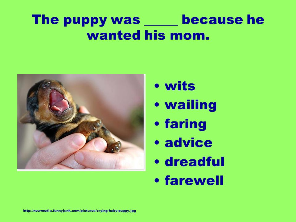 The puppy was _____ because he wanted his mom. wits wailing faring advice dreadful farewell http://newmedia.funnyjunk.com/pictures/crying-baby-puppy.j
