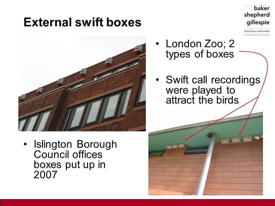 External swift boxes Islington Borough Council offices boxes put up in 2007 London Zoo; 2 types of boxes Swift call recordings were played to attract