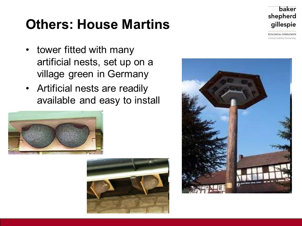 Others: House Martins tower fitted with many artificial nests, set up on a village green in Germany Artificial nests are readily available and easy to