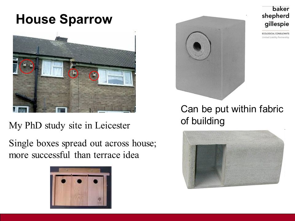 House Sparrow Can be put within fabric of building My PhD study site in Leicester Single boxes spread out across house; more successful than terrace i