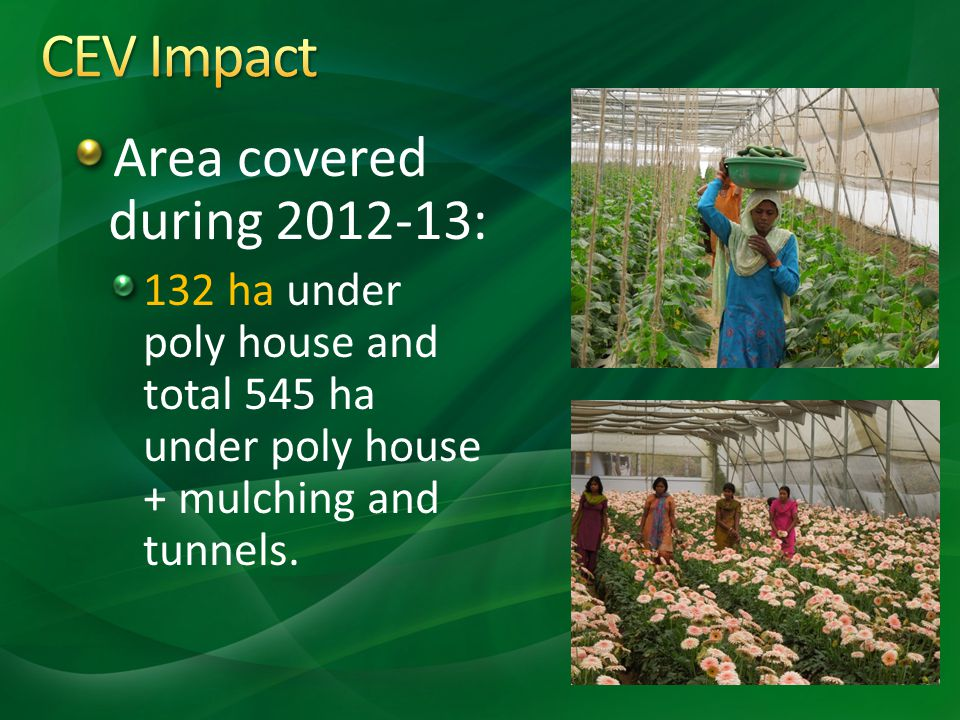 Area covered during 2012-13: 132 ha under poly house and total 545 ha under poly house + mulching and tunnels.
