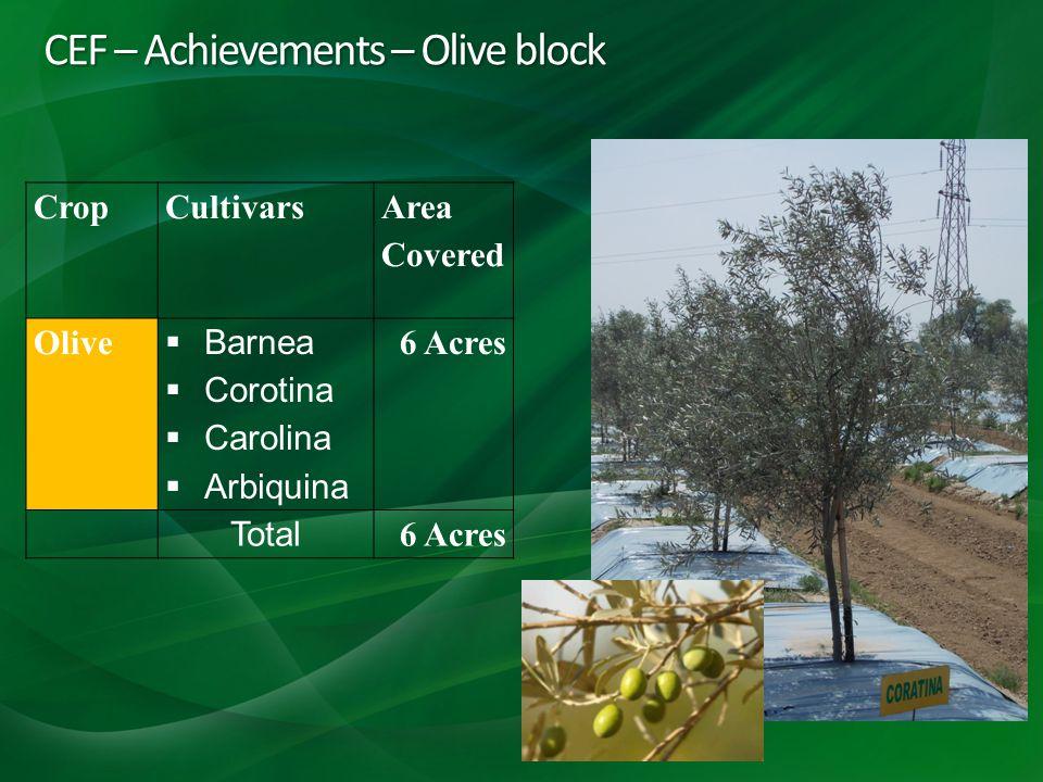 CEF – Achievements – Olive block CropCultivars Area Covered Olive Barnea Corotina Carolina Arbiquina 6 Acres Total 6 Acres