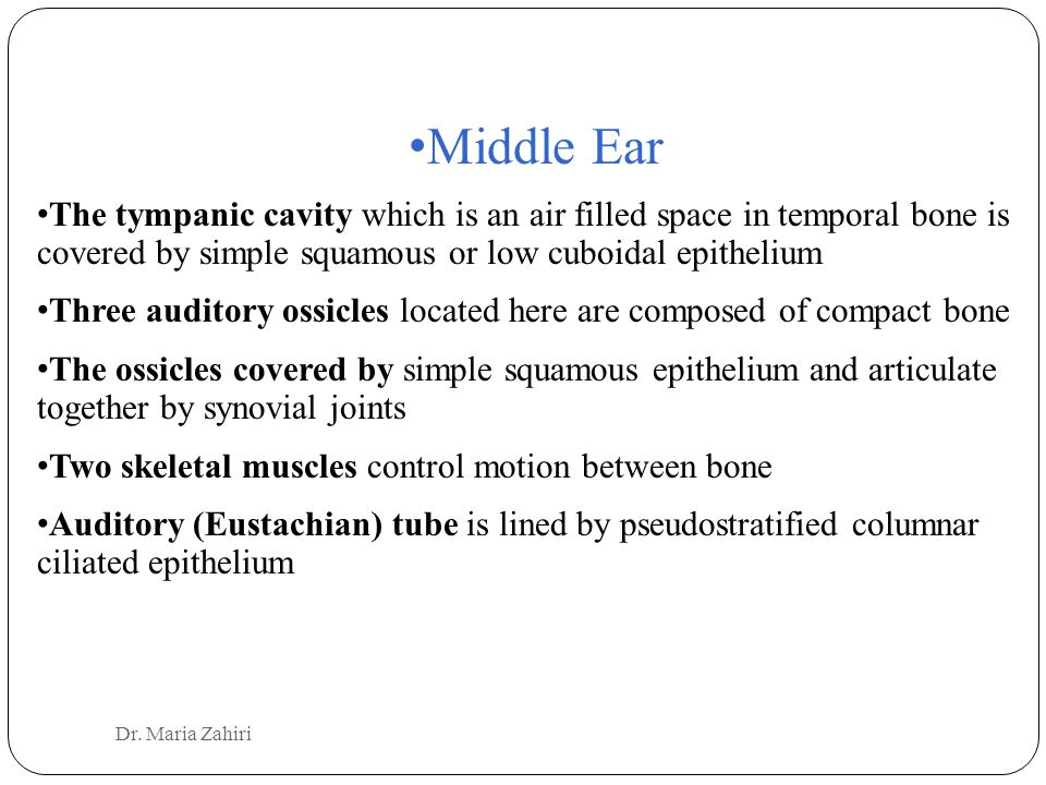 Middle Ear The tympanic cavity which is an air filled space in temporal bone is covered by simple squamous or low cuboidal epithelium Three auditory ossicles located here are composed of compact bone The ossicles covered by simple squamous epithelium and articulate together by synovial joints Two skeletal muscles control motion between bone Auditory (Eustachian) tube is lined by pseudostratified columnar ciliated epithelium Dr.