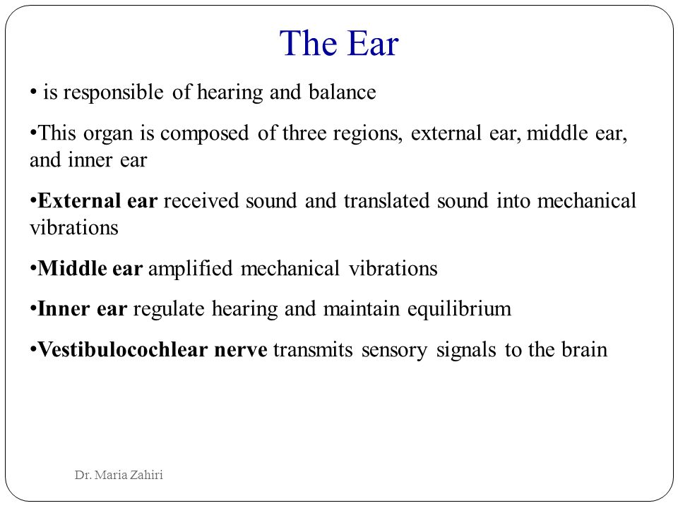 The Ear is responsible of hearing and balance This organ is composed of three regions, external ear, middle ear, and inner ear External ear received s