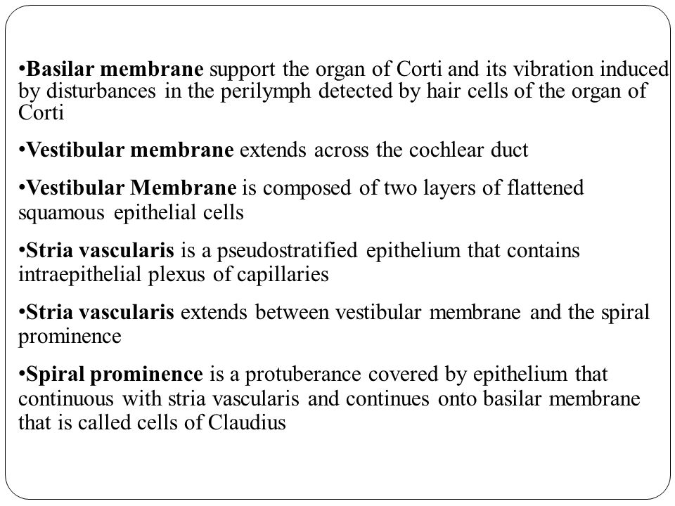 Basilar membrane support the organ of Corti and its vibration induced by disturbances in the perilymph detected by hair cells of the organ of Corti Vestibular membrane extends across the cochlear duct Vestibular Membrane is composed of two layers of flattened squamous epithelial cells Stria vascularis is a pseudostratified epithelium that contains intraepithelial plexus of capillaries Stria vascularis extends between vestibular membrane and the spiral prominence Spiral prominence is a protuberance covered by epithelium that continuous with stria vascularis and continues onto basilar membrane that is called cells of Claudius