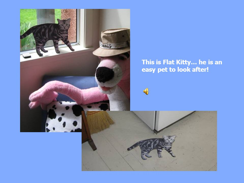 This is Flat Kitty… he is an easy pet to look after!
