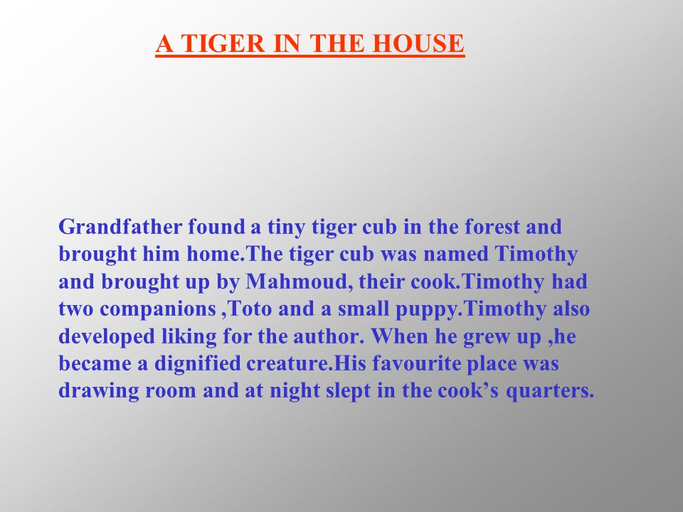 Grandfather found a tiny tiger cub in the forest and brought him home.The tiger cub was named Timothy and brought up by Mahmoud, their cook.Timothy ha
