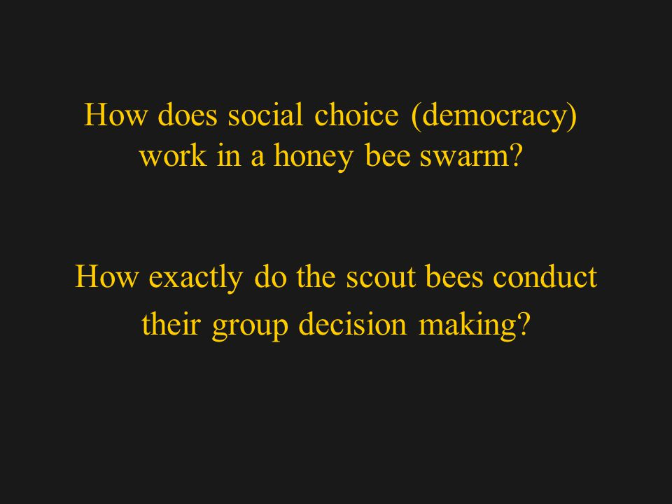 How exactly do the scout bees conduct their group decision making.