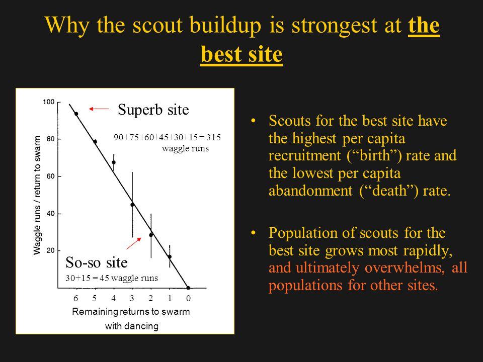 Why the scout buildup is strongest at the best site Scouts for the best site have the highest per capita recruitment (birth) rate and the lowest per c