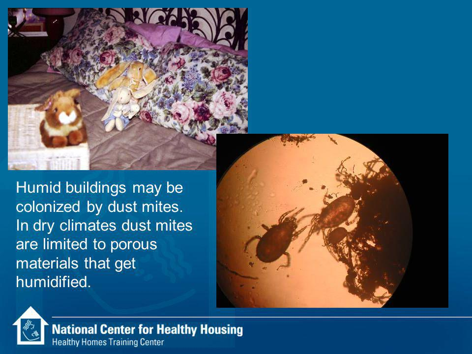 Humid buildings may be colonized by dust mites.