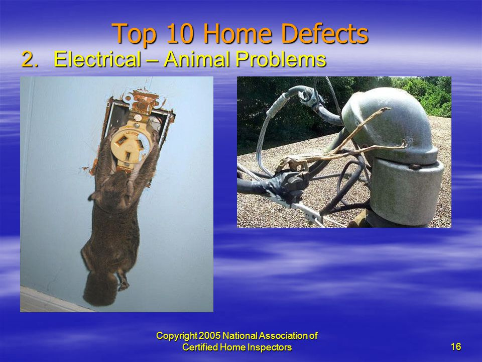 Copyright 2005 National Association of Certified Home Inspectors 16 Top 10 Home Defects 2.Electrical – Animal Problems