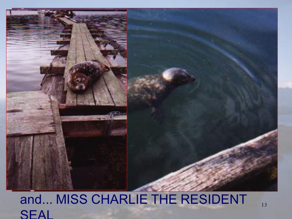 12 MISS CHARLIES RESTAURANT MV UCHUCK