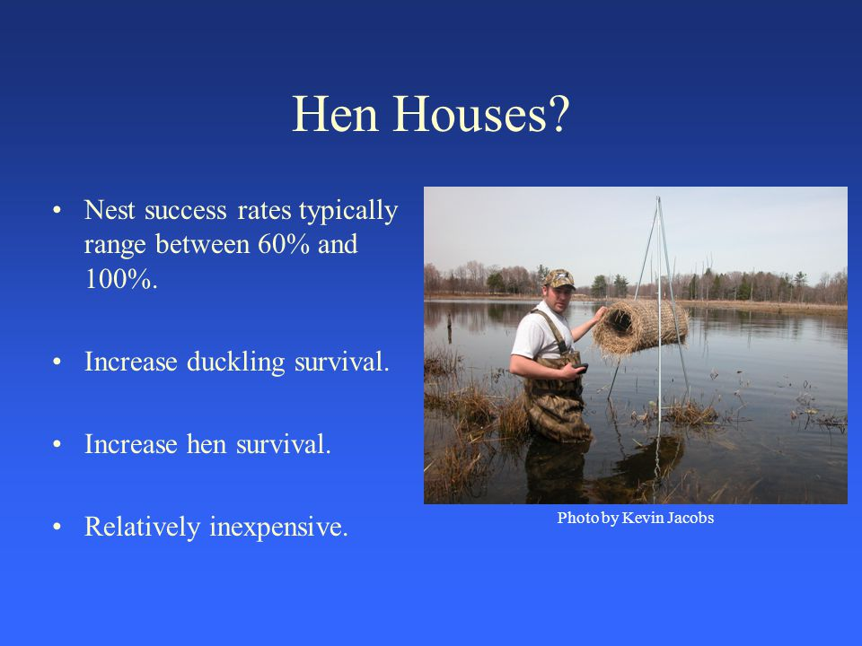 Hen Houses? Nest success rates typically range between 60% and 100%. Increase duckling survival. Increase hen survival. Relatively inexpensive. Photo