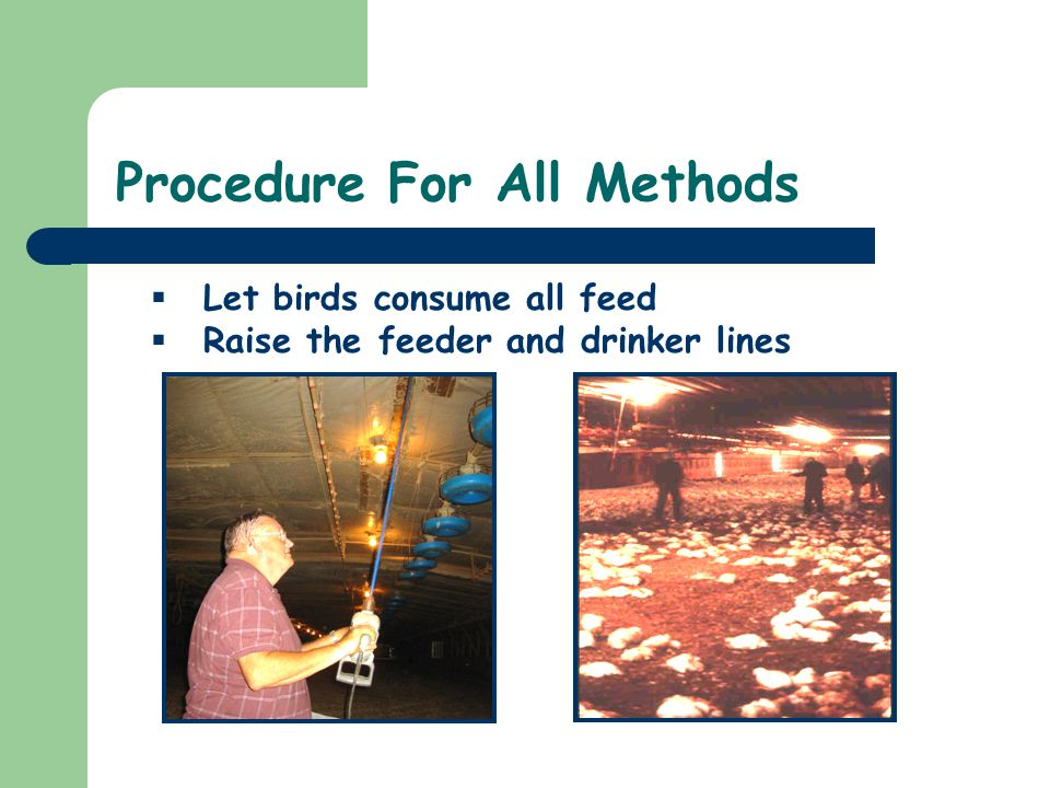 Procedure For All Methods Let birds consume all feed Raise the feeder and drinker lines