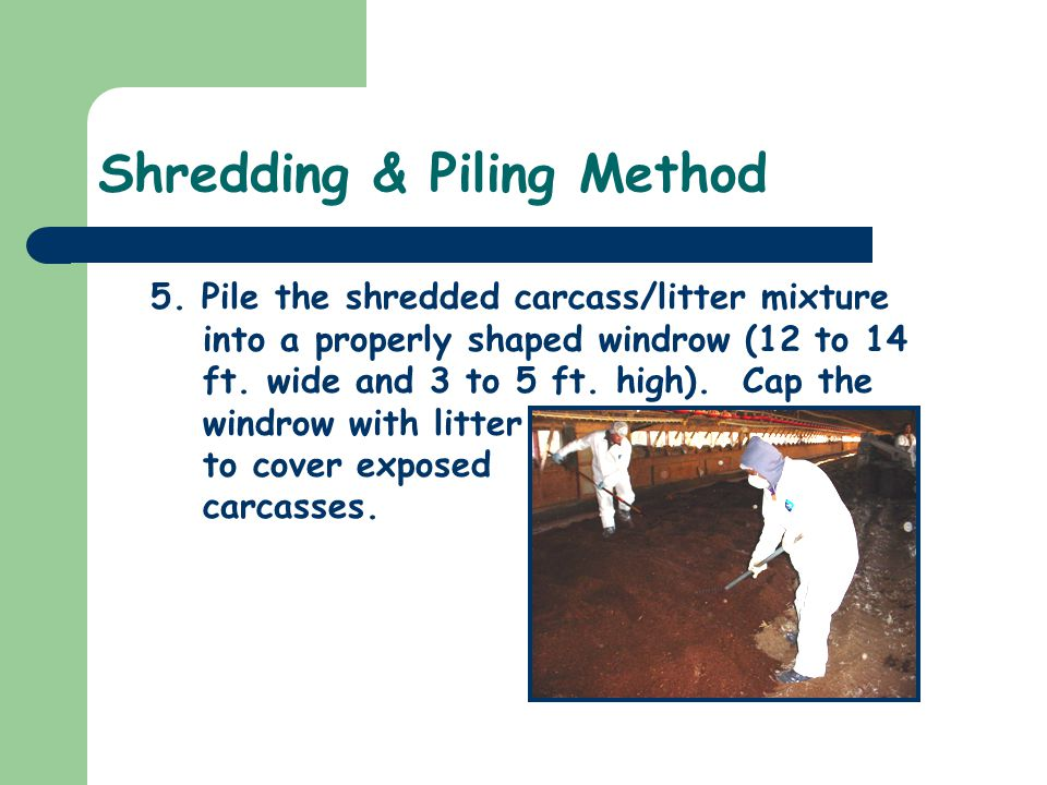 Shredding & Piling Method 5. Pile the shredded carcass/litter mixture into a properly shaped windrow (12 to 14 ft. wide and 3 to 5 ft. high). Cap the