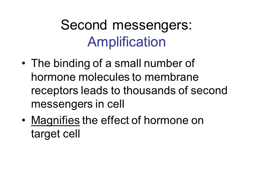 Second messengers: Amplification The binding of a small number of hormone molecules to membrane receptors leads to thousands of second messengers in c