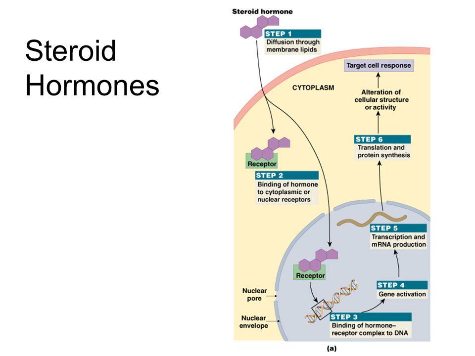 Figure 18–4a Steroid Hormones