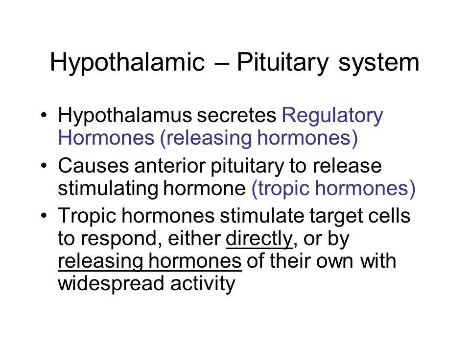 Hypothalamic – Pituitary system Hypothalamus secretes Regulatory Hormones (releasing hormones) Causes anterior pituitary to release stimulating hormon