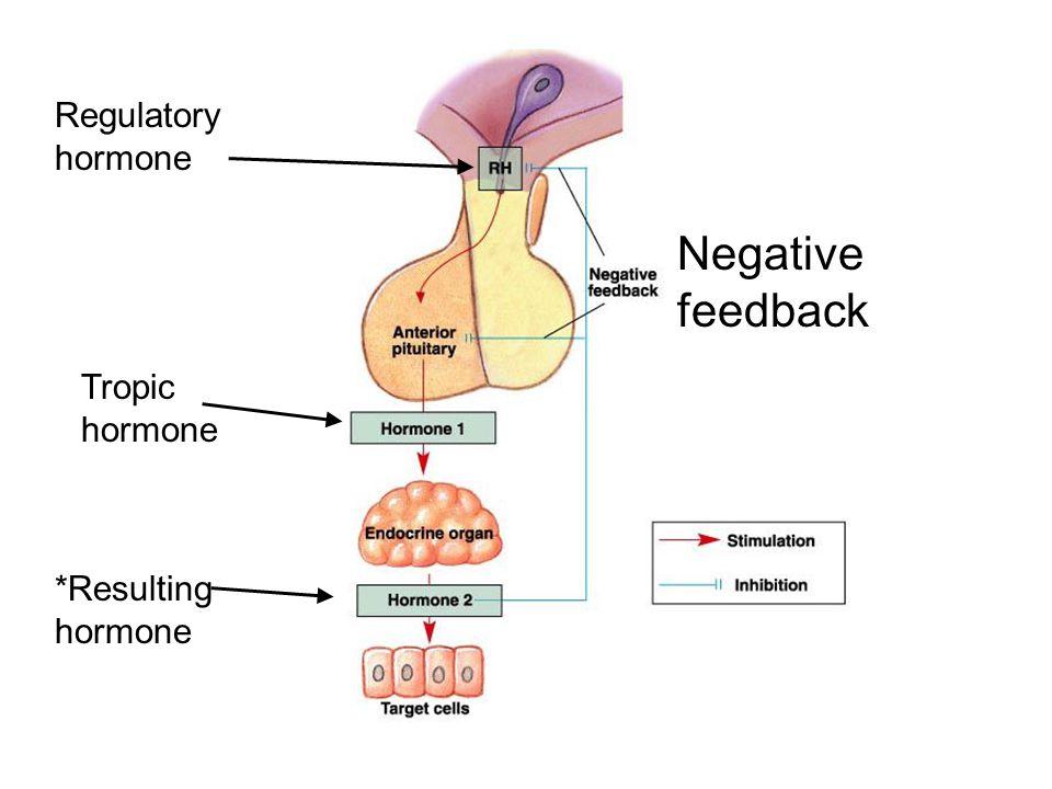 Regulatory hormone Tropic hormone *Resulting hormone Negative feedback