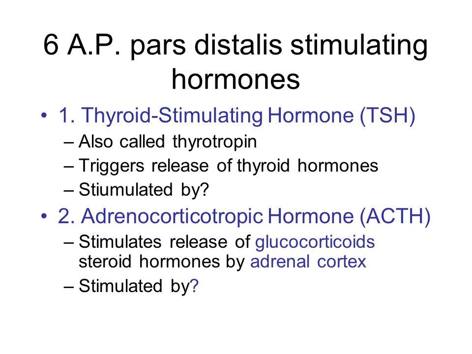 6 A.P. pars distalis stimulating hormones 1. Thyroid-Stimulating Hormone (TSH) –Also called thyrotropin –Triggers release of thyroid hormones –Stiumul