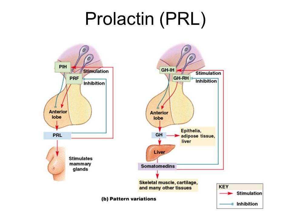 Figure 18–8b Prolactin (PRL)