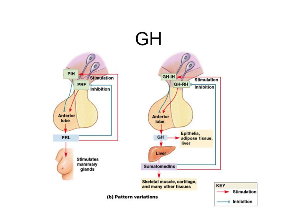 Figure 18–8b GH