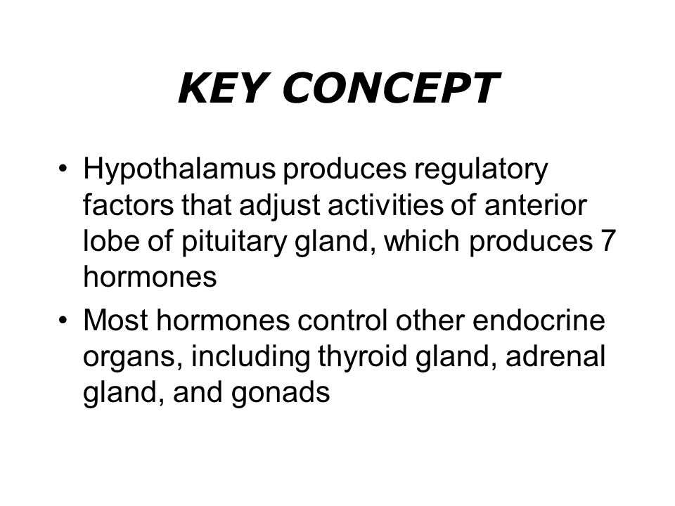 KEY CONCEPT Hypothalamus produces regulatory factors that adjust activities of anterior lobe of pituitary gland, which produces 7 hormones Most hormon