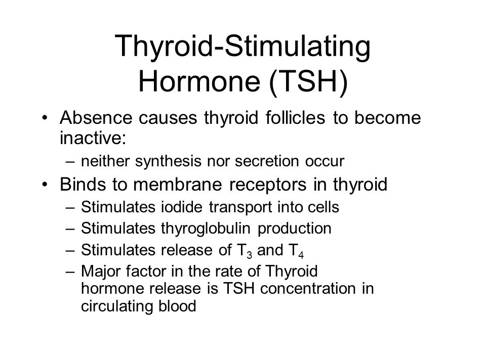 Thyroid-Stimulating Hormone (TSH) Absence causes thyroid follicles to become inactive: –neither synthesis nor secretion occur Binds to membrane recept