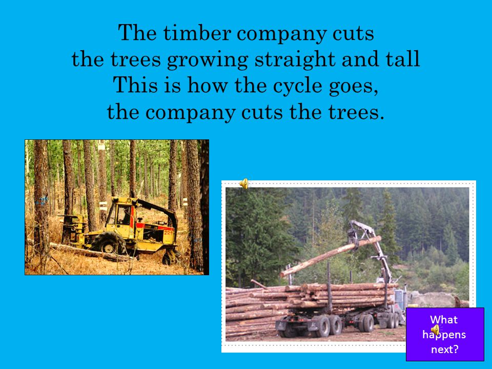 The farmer sells the trees to the timber company. This is how the cycle goes, the farmer sells the trees. What happens next?
